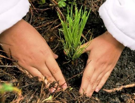 Preservar los bosques y el clima