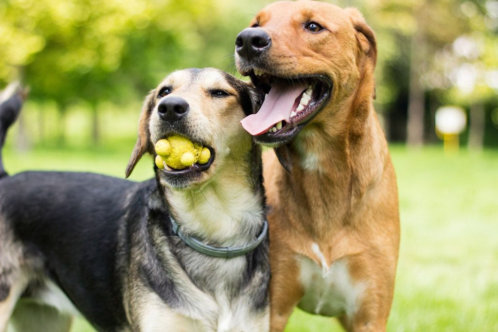 Pets: A shortcut to the heart of your consumer